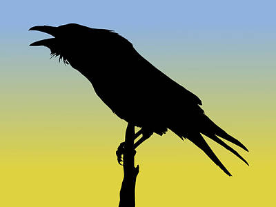Common Raven Silhouette At Sunrise Poster