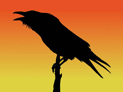 Common Raven Silhouette At Sunset Poster