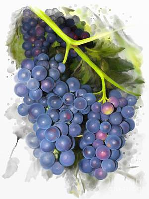 Poster featuring the painting Concord Grape by Ivana Westin