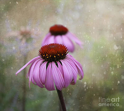 Coneflower Dream Poster