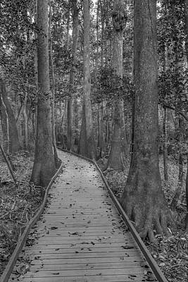 Poster featuring the photograph Congaree 2017 03 Bw by Jim Dollar