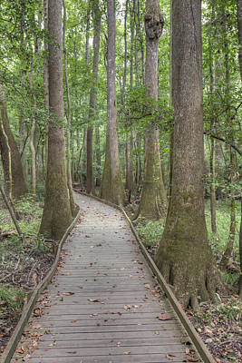 Poster featuring the photograph Congaree 2017 03 by Jim Dollar