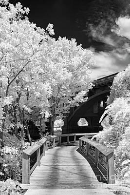 Congaree River Boardwalk Poster