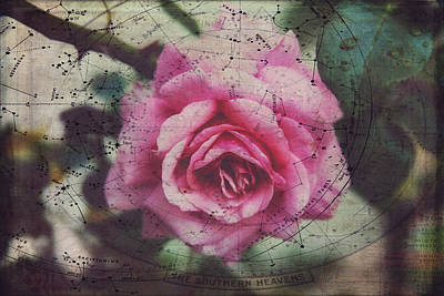 Constellation Rose Poster by Toni Hopper