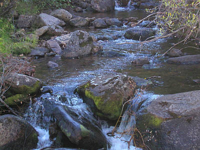 Poster featuring the photograph Cool Creek by Tammy Sutherland