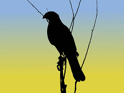 Coopers Hawk Silhouette At Sunrise Poster