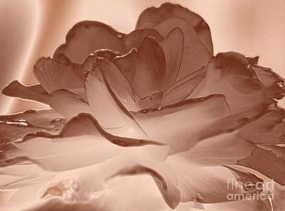 Copper Peony Poster