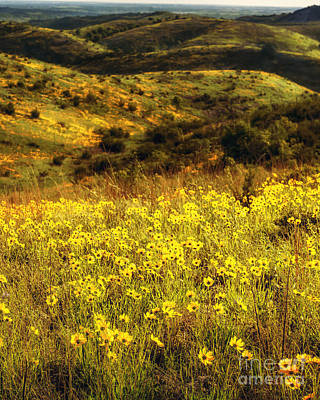 Coreopsis In The Arbuckles, Vertical Poster by Tamyra Ayles