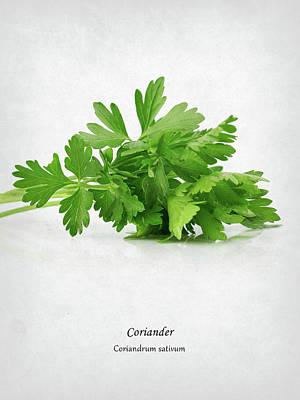Coriander Poster