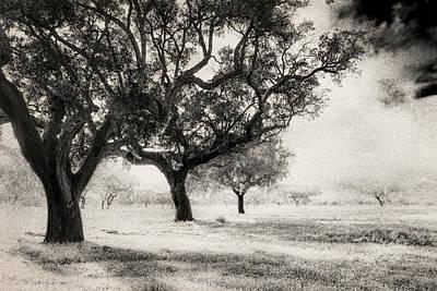 Cork Trees Poster