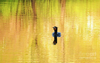 Double Crested Cormorant With Crazy Hair Poster by Charline Xia