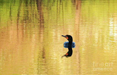 Cormorant With Reflections Poster by Charline Xia