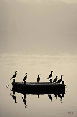 Cormorants And Dock Taunton River No. 2 Poster