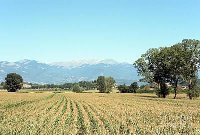 Corn Field With Terminillo Mount Poster