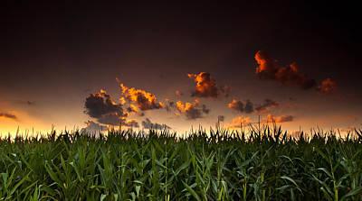 Corn Sunset Poster