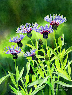 Cornflowers With Background Poster