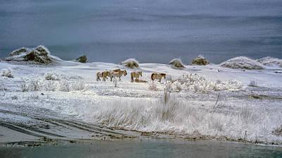 Corrola Wild Horses Poster