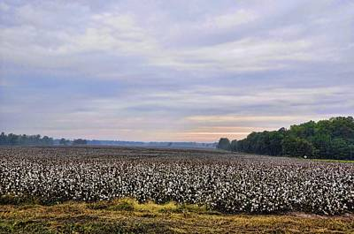 Cotton As Far As You Can See Poster by Jan Amiss Photography