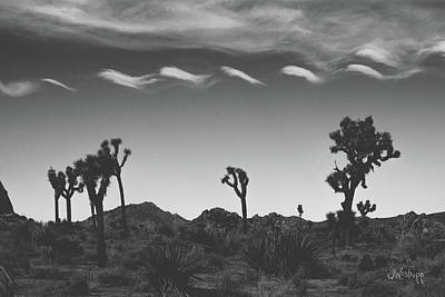 Cotton Sky On Joshua Trees Poster by Joseph Westrupp