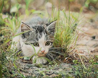 Cotton The Kitten Poster
