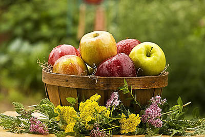 Country Basket Of Apples Poster by Trudy Wilkerson