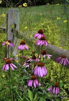 Country Coneflowers Poster