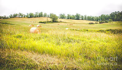 Country Landscape With Haystacks And Tall Grass Trampled - Panoramic Format Poster by Luca Lorenzelli