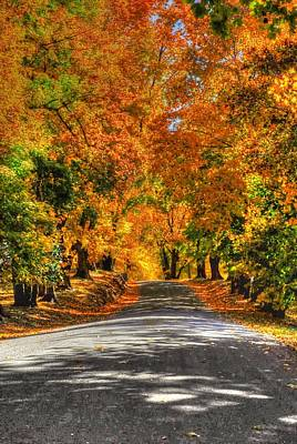 Country Lane In Fall Poster by Linda Covino