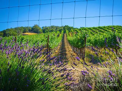 Country Lavender V Poster by Shari Warren