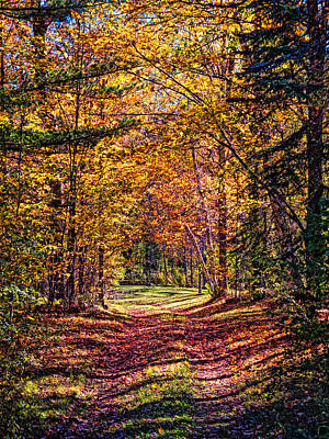 Country Road Fall Poster by Linda Pulvermacher