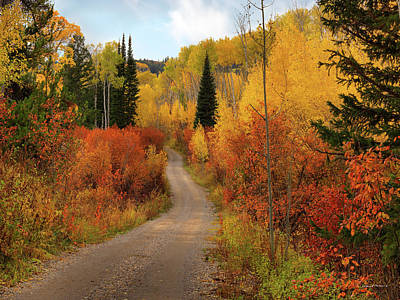 Country Road In Autumn Poster by Leland D Howard