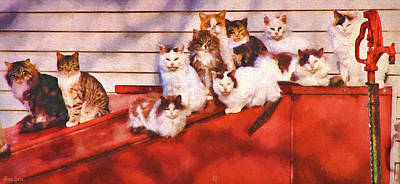 Countryside Cats Poster
