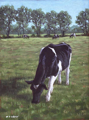 Cow In Field At Throop Uk  Poster by Martin Davey