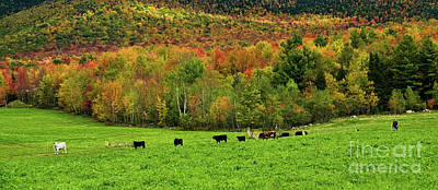 Cow Pasture In Fall Poster