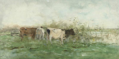 Cows With A Puddle Poster