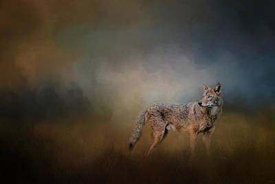 Coyote At Shiloh Poster