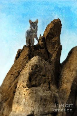 Coyote On Rocks Poster by Jill Battaglia