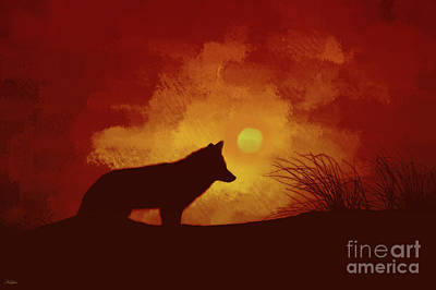 Coyote Sunset Poster