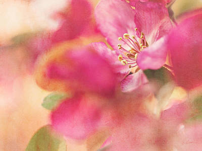 Crab Apple Blossoms II Poster