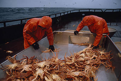 Crab Fishermen Sorting Their Catch Poster