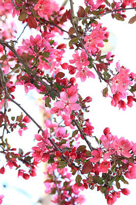 Poster featuring the photograph Crabapple Beauty by Rick Morgan