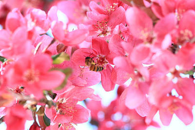 Poster featuring the photograph Crabapple Bees 2 by Rick Morgan