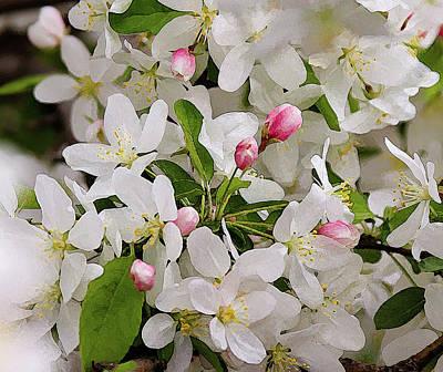 Crabapple Blossoms 5 Poster