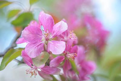 Crabapple Tree Bloom Poster by Jenny Rainbow