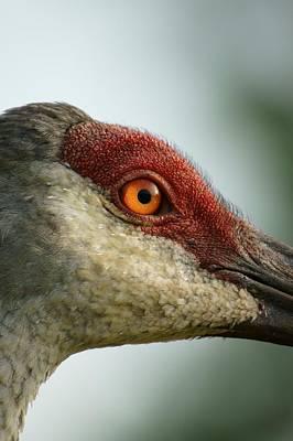 Crane Close Up Poster