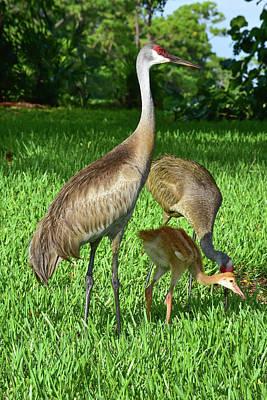 Crane Family Picnic Poster