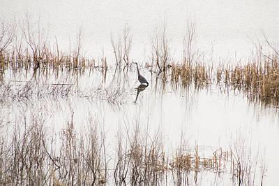 Crane In Reeds Poster by Laura Pratt
