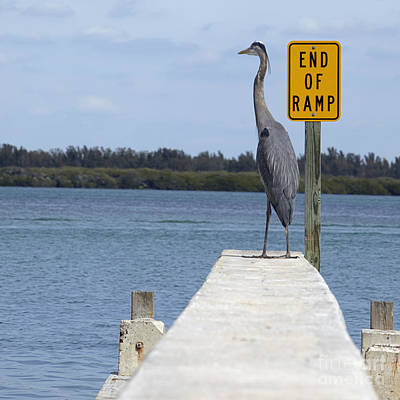 Crane Standing On A Boat Ramp Poster by Skip Nall