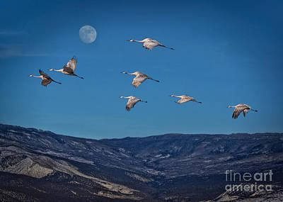 Cranes Across Colorado Blue Poster by Janice Rae Pariza