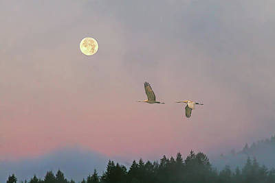 Poster featuring the photograph Cranes And A Full Moon At Dawn by Peggy Collins